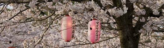 Thés Bio Japonais